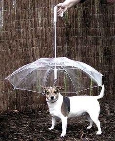 Un paraguas para perros.