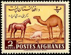 1961: Horse (Equus ferus caballus), Dromedary (Camelus dromedarius (אפגניסטן) (Agriculture Day) Mi:AF 520,Sn:AF 486