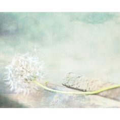 Dandelion Photography,Dream, Inspirational,neutral abstract art,nature... ($15) ❤ liked on Polyvore featuring home, home decor, wall art, photo wall art, photographic wall art, inspirational wall art, neutral home decor and flower home decor