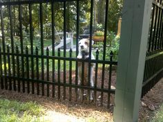 Have a little puppy that thinks he/she is Whodini?  Try SPECRAIL Aluminum Fence's Puppy Panel modification.