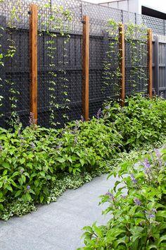 Brighton - Contemporary - Melbourne - by Garden Constructions Garden Privacy Screen, Screen Plants, Garden Trellis, Side Garden, Wall Climbing Plants, Landscape Design, Garden Design, Creepers Plants, Melbourne Garden
