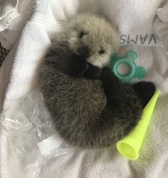 Help care for abandoned baby otter