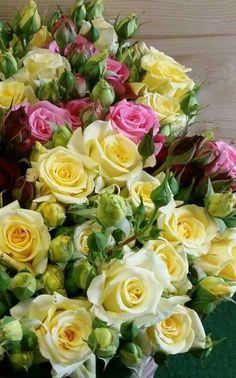 Beautiful Flowers Garden, Beautiful Flower Arrangements, Amazing Flowers, Beautiful Roses, Pretty Flowers, Floral Arrangements, Flores Para Algernon, Flowers For Algernon, Rose Pictures