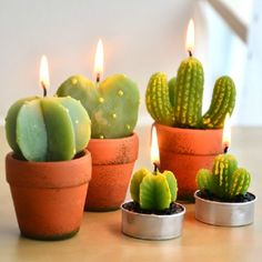 Cactus candles