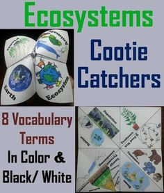 These ecosystems cootie catchers are a great way for students to have fun while learning about ecosystems. These cootie catchers contain the following vocabulary words on ecosystems: Biome, Habitat, Energy Pyramid, Food web, Population, Decomposers, Producers, ConsumersThese cootie catchers on ecosystems come in color and black & white, and also come with a version where students can add their own definitions.