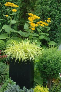 Use perennial or annual grasses in an interesting container for a beautiful patio or garden accent.