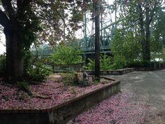 Vancouver, Washington  #trees #flowers Vancouver Washington, Fiction Novels, Sidewalk, Trees, Spaces, Explore, Flowers, Side Walkway, Tree Structure