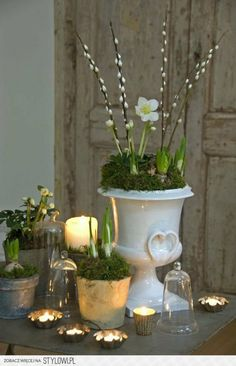 love the planted bulbs, the containers and the pussy-willow branches inserted along with the bulbs. love the planted bulbs, the containers and the pussy-willow branches inserted along with the bulbs. Deco Floral, Arte Floral, Shabby Chic, Willow Branches, Decoration Bedroom, Decor Room, Spring Bulbs, Spring Has Sprung, Spring Flowers