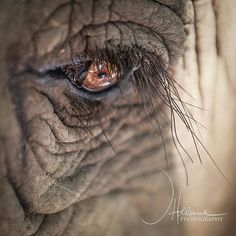 Elephant up close and personal 🐘