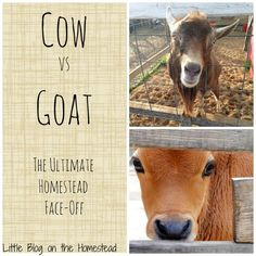 Both dairy options are great, but how will you choose what's right for your homestead? Check out this great pro/con list