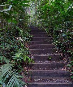 Bukit Timah Nature Preserve, Singapore