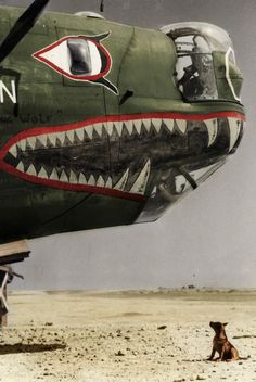 """ Liberator with Shark mouth, air force, Italy "" Military Militaire Militar Militare Ww2 Aircraft, Military Aircraft, Aircraft Painting, Airplane Art, Ww2 Planes, Nose Art, Aviation Art, Military Art, World War Ii"
