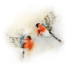 Bullfinches by Dima Rebus
