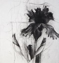 Jake Muirhead / Middlebury Irises, 2011 / etching and drypoint (two plates - 2 of / 9 x 12 Art And Illustration, Botanical Illustration, Plant Drawing, Painting & Drawing, Colour Drawing, Drawing Flowers, Iris Drawing, Botanical Drawings, Botanical Art