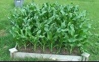 What is Backyard Farming and why you should consider it:   http://www.trybackyardfarming.com/blog/what-is-backyard-farming/