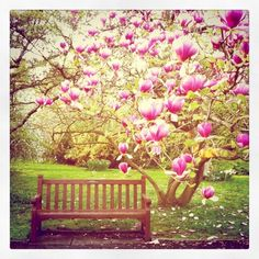 Susannah Conway-Notes of Unravelling the Heart Spring Ahead, Spring Day, Spring Fever, Beautiful Flowers, Beautiful Pictures, Magnolia Trees, Spring Blossom, Cherry Blossom, Gardens