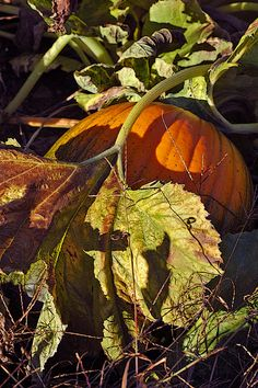 #spiritsays: Always the last one to be picked, you wonder if you'll ever have your day in the sun, run with the popular crop. Have faith plump pumpkin, you are exactly what they are looking for. Your heart will not be squashed. http://karenweikert.com