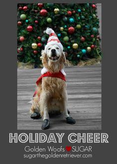 Golden Woofs, Sugar the Golden Retriever Holiday Cheer