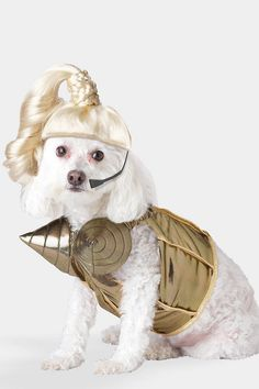 Express what your dog's got, oh baby ready or not... #popqueen #halloween #dogcostume