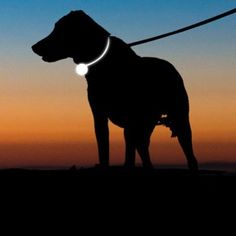 Autumn is officially here and with it comes darker nights and mornings. Gear up and go for glow with our reflective range for walkies see our top pics - link in bio #autumn #autumn #walkies #dogs #reflective #reflectivecollars #goforglow #glow #dogsofinstagram #dogs #doggo