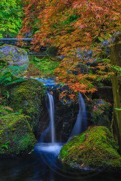 Japanese gardens www.arashiimages.com
