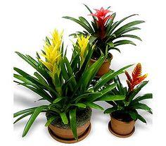 Exotic Bromeliad in La Jolla CA, Adelaide's Florists and Decorators