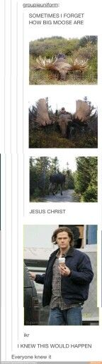 Moose :D
