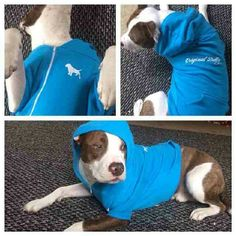 Thanks to @the_real_vw for the pic, here's Ciroc in one of our neon blue #OriginalBully #dog #Hoodies ! #pitbull #dog #pet #dontbullymybreed #picoftheday #inbullywetrust