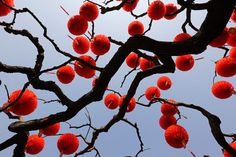 Red lantern decorations are installed on a tree for the upcoming Spring Festival celebrations in a temple fair at a park in Beijing