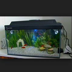1000 images about fish on pinterest betta tank betta for Zen fish tank