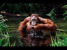 Com: Steve Bloom Wildlife Photography Funny Animal Videos, Funny Animal Pictures, Funny Animals, Cute Animals, Book Photography, Wildlife Photography, Primates, Mammals, Steve Bloom