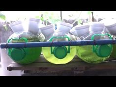 5 things you need to start growing hydroponic plants. - YouTube