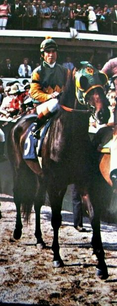 Sham, the second fastest ever. An amazing race horse without any credit. He ran the second fastest Derby and Preakness ever, behind the fastest horse in the world, Secretariat. If Secretariat hadn't been in the picture, Sham would be considered the greatest race horse that ever lived. Instead, Secretariat took that title.