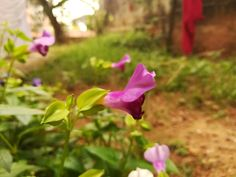 Blooming....