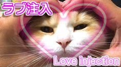 にゃんこにラブ注入【子猫可愛いおもしろい猫動画楽しんごもびっくり?w】