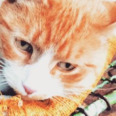 Ginger by Tony Escorcio Display Advertising, Print Advertising, Marketing And Advertising, Retail Merchandising, Ginger Cats, Us Images, Wall Art Prints, Stock Photos, Photography