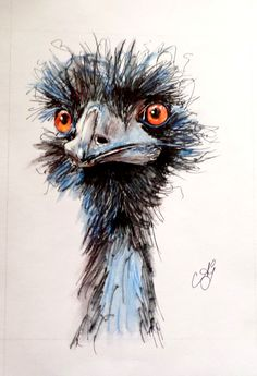 pictures of funky painted ostriches - Bing images Watercolor Animals, Watercolor And Ink, Watercolor Paintings, Watercolours, Bird Drawings, Animal Drawings, Pelican Art, Animal Paintings, Bird Art