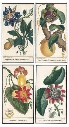 Descourtilz Caribbean Flowers, Set of 4 | 5-Minute Escape | One Kings Lane