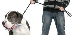Trucos para evitar que el perro tire de la correa - http://www.mundoperros.es/trucos-para-evitar-que-el-perro-tire-de-la-correa/