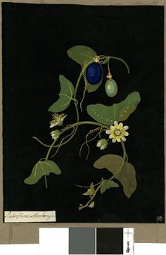 Passiflora Murucuja (Gymnos: Pentagynia), from an album (Vol.VII, 53). 1777 Collage of coloured papers, with bodycolour and watercolour, on ...
