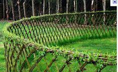 willow hedging | Kris en Rambo: Wilgenhaag