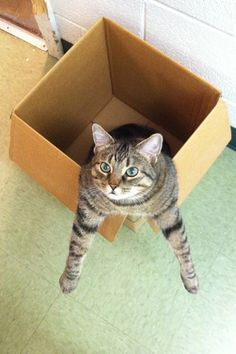 These 12 Cats Cannot Contain Their Love For Boxes #refinery29  http://www.refinery29.com/the-dodo/93#slide10  BRING ME MORE BOXES, HUMAN.