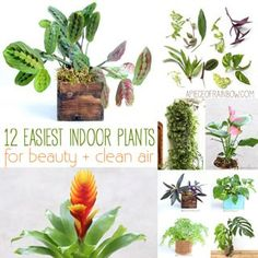 12 best air purifying indoor plants: bring beauty and well-being to your home with these easy to grow house plants, including indoor hanging plants, flowering plants, indoor plants for low light, and plant care tips!