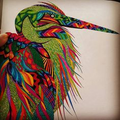 Millie Marotta Animal Kingdom Bird Using Connector Pens A