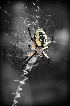 Garden spider photography, beautiful spider art, insect photography, spider pattern, yellow spider, spider web print, Sky Weaver by BeyondaGlance on Etsy