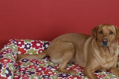 Kip Dog Bed  Lounger with Bolster in Anja Summer fabric