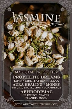 Dried Jasmine Flowers. Jasminum Officinale. For Love, Meditation, Relaxation, Prophetic Dreams, Healing the Aura, psychic protection, money flow, confidence building or as an aphrodisiac to draw in lovers.   herbalist, botanical, apothecary, witch cottage, wicca, magick.  Available Here: http://www.whitewitchparlour.com/product-p/jas1.htm