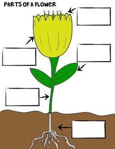 From seed to plant science experiments and activities all about from seed to plant science experiments and activities all about the kiddies pinterest science experiments seeds and plants ccuart Choice Image