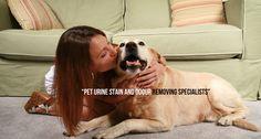 dog training,teach your dog,dog learning,dog tips,dog hacks Love My Dog, Pet Dogs, Dogs And Puppies, Dog Urine, Dog Hacks, Dog Care, Doge, Mans Best Friend, Dog Grooming