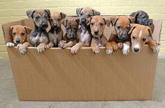 Dicas Boas pra Cachorro !: 15 MOTIVOS PARA CASTRAR UMA CADELA